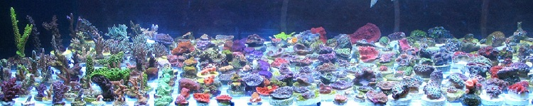 Picture is of a few of our live corals.