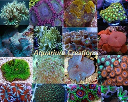 Picture of Hardy LPS & Soft Coral Frag Package