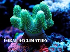 Coral Acclimation