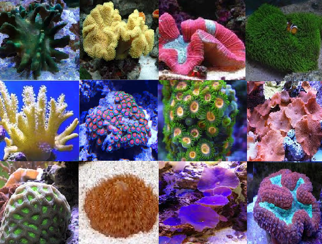 Easy Care Coral Packs