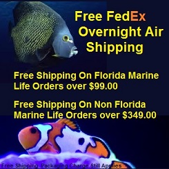 Saltwater Fish Shipping