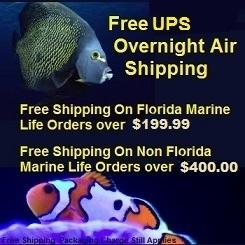 Saltwater Fish Shipping