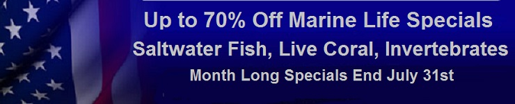Weekly Specials on Saltwater Fish, Live Coral & Invertebrates