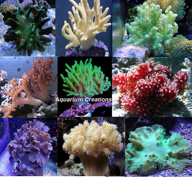 Picture of  Aquarium Creations Leather Coral Package