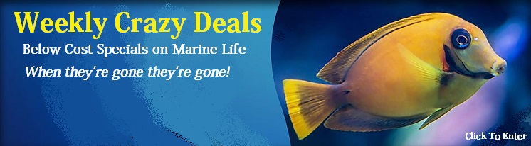 Weekly Saltwater Fish and Marine Life Specials!