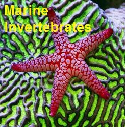 Saltwater Invertebrates