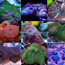 Picture of Mushroom Coral Pack