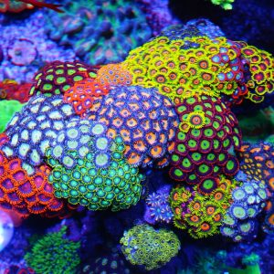 Best Coral Food Size