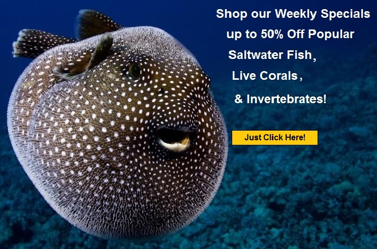 Save on live coral saltwater fish and much more for Live saltwater fish