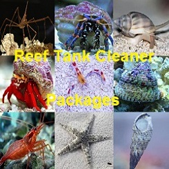 Reef Cleaner Packages for saltwater aquariums