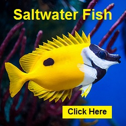 Click here and go to Aquarium Creations Online's large variety on Aquariumcreationsonline.net