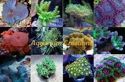 Picture of Aquarium Creations Soft Coral Package