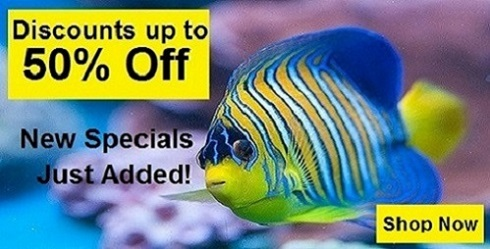 Marine Life Specials Up to 50% Off