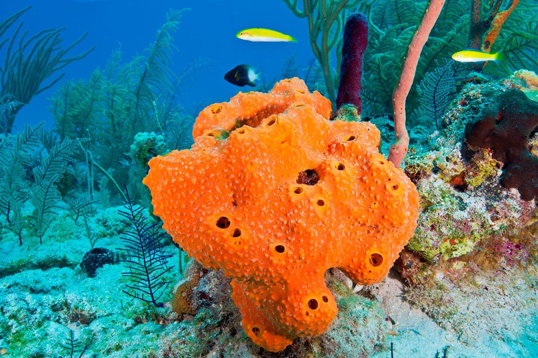 Ocean spongessea spongessponges for saltwater aquariums reviewsmspy