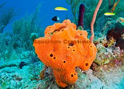 Picture of Red/Orange Ball Sponge