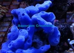 ... Sponge 2+ Inch Frag Lightening Sponge 3+ Inch Frag Sponge Colony