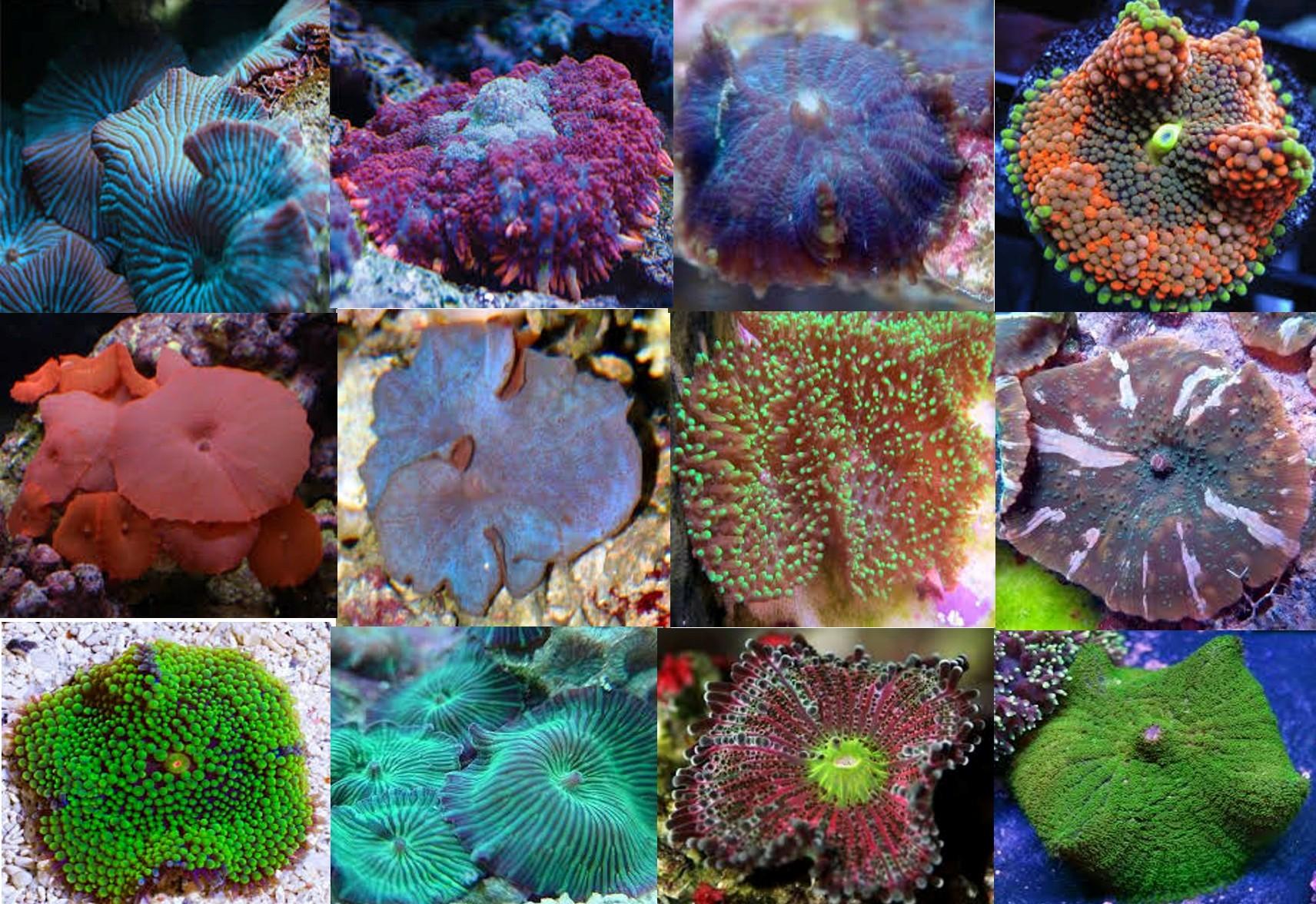 Aquarium Coral Pack: Saltwater Aquarium Corals